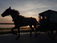 Horse_and_Buggy+animals+sunrise-sunset.jpg