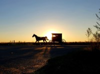 Horse_and_Buggy_II+animals+sunrise-sunset.jpg