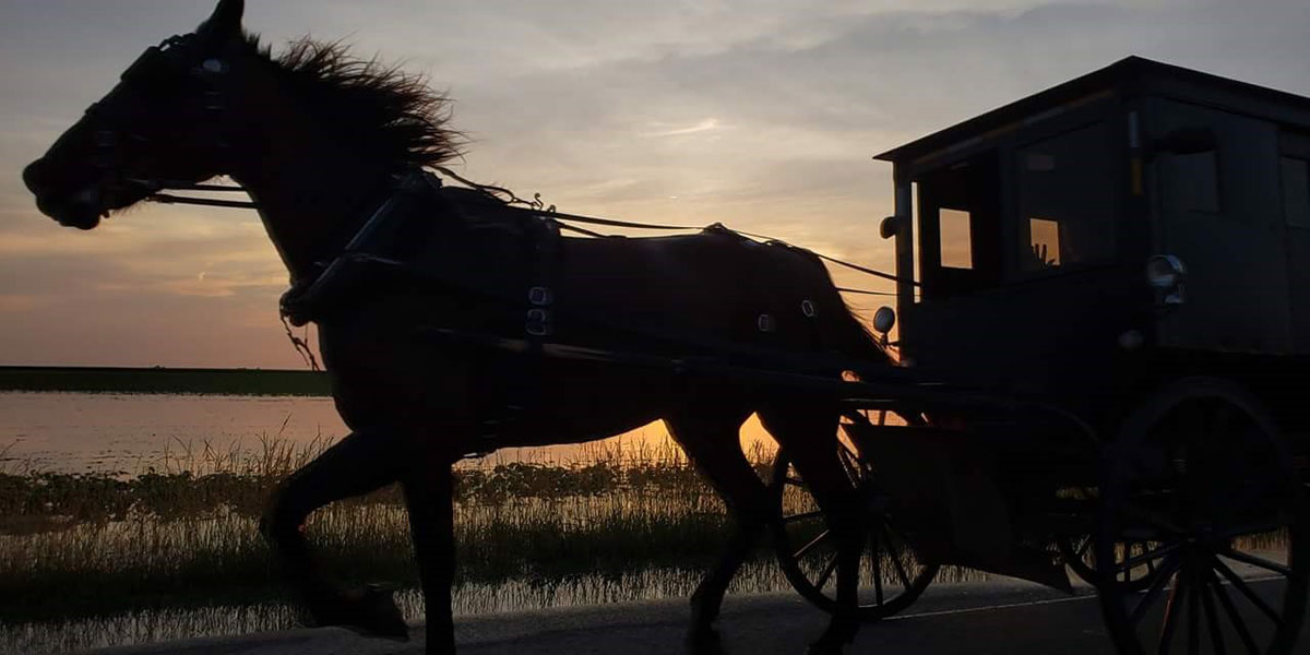 A close silhouette of an Amish horse and buggy